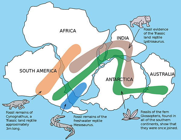 fossil distribution across continents